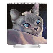 Siamese In Blue Shower Curtain