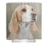 Beagle Portrait Shower Curtain