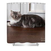 Siberian Forest Cat Shower Curtain