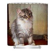 Siberian Forest Kitten II Shower Curtain