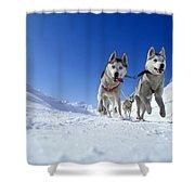 Siberian Husky Dogs Shower Curtain