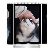 Siberian Husky Puppies Mans Best Friend Shower Curtain