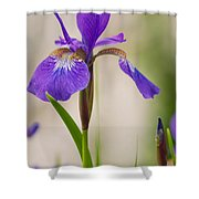 Siberian Iris Blossom Shower Curtain
