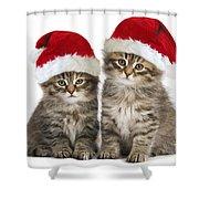 Siberian Kittens In Hats Shower Curtain