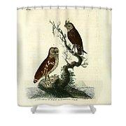 Siberian Owl And Acadian Owl Shower Curtain