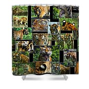 Siberian Tiger Collage Shower Curtain