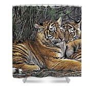 Siberian Tiger Cubs Endangered Species Wildlife Rescue Shower Curtain