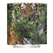 Siberian Tiger In Hiding Wildlife Rescue Shower Curtain