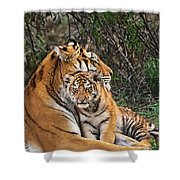 Siberian Tiger Mother And Cub Endangered Species Wildlife Rescue Shower Curtain