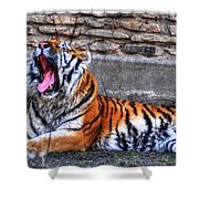 Siberian Tiger Nap Time Shower Curtain