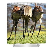 Sibling Rivalry 2 Shower Curtain