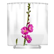 Sidalcea 2 Shower Curtain