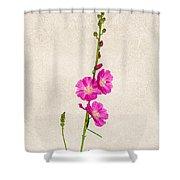 Sidalcea 3 Shower Curtain