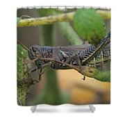 Side Of Big Brown Grasshopper Shower Curtain
