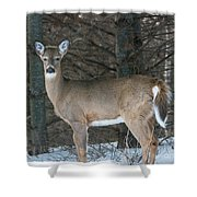 Side Of The Road Deer Shower Curtain