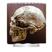 Side Profile View Of Human Skull   Shower Curtain