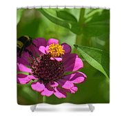 Side-saddled Bee Shower Curtain
