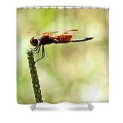 Side View Of A Calico Pennant Shower Curtain