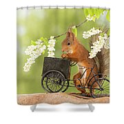 Side View Of Red Squirrel Playing Shower Curtain
