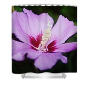 Side Yard Flower 1 Shower Curtain