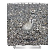 Sidestepping Sandpiper Shower Curtain
