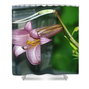 Sideview Of Beauty Shower Curtain