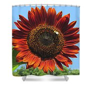 Sienna Sunflower Shower Curtain