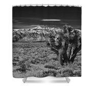 Sierra Nevada Mtns And Joshua Tree Img 0604 Shower Curtain