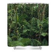 Sierra Palm Trees El Yunque Puerto Rico Shower Curtain