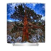 Sierra Pine Shower Curtain