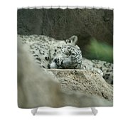 Siesta Shower Curtain