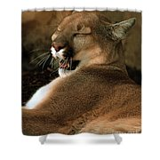 Siesta Time Shower Curtain
