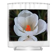 Signs Of Spring Shower Curtain