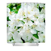 Signs That Spring Has Sprung Shower Curtain