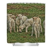 Silence Of The Lambs Shower Curtain