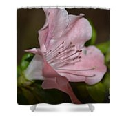 Silent Pink Photo B Shower Curtain