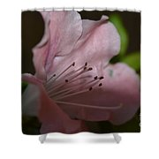 Silent Pink Photo D Shower Curtain
