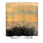 Silhouette Of Grass And Weeds Against The Color Of The Setting Sun Shower Curtain