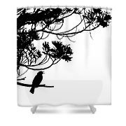 Silhouette Of Singing Common Blackbird In A Tree Shower Curtain by Stephan Pietzko