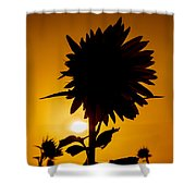Silhouette Of The Sunflower Shower Curtain