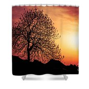 Silhouette Of Tree Shower Curtain