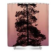 Silhouette Tree At Sunrise Shower Curtain