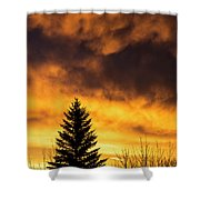 Silhouetted Evergreen Tree Shower Curtain