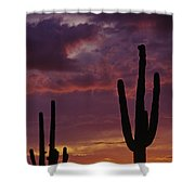 Silhouetted Saguaro Cactus Sunset  Shower Curtain