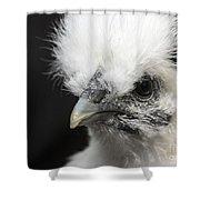 Silkie Chicken Portrait Shower Curtain