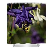 Silky Blue Columbine And A Busy Bee Shower Curtain