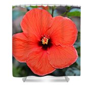 Silky Red Hibiscus Flower Shower Curtain