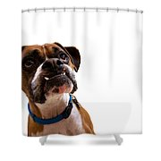 Silly Boxer Dog Shower Curtain