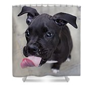 Silly Boxer Sticking Tongue Out Shower Curtain