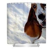 Silly Basset Hound  Shower Curtain